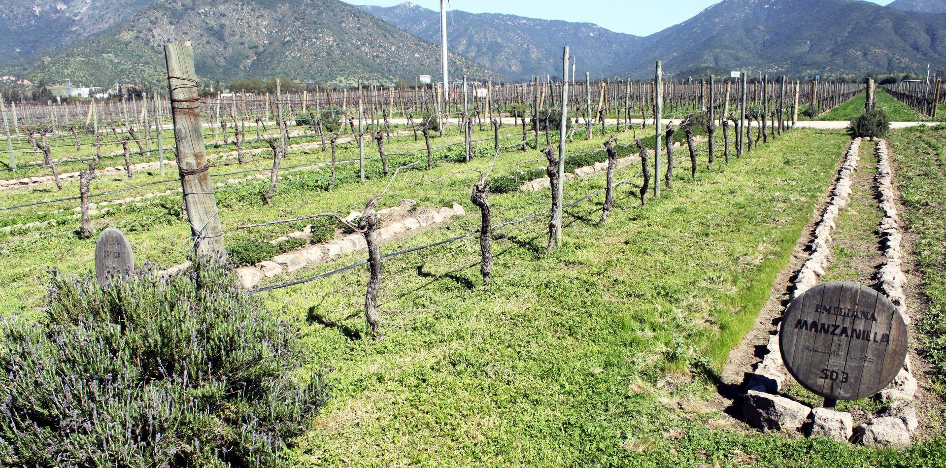 vinicola-emiliana-valle-de-casa-blanca-chile-05